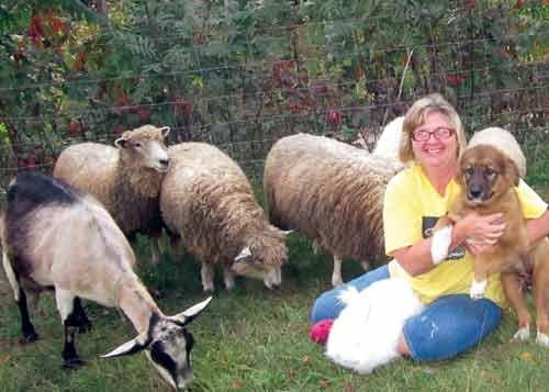 Kelly Anderson of Bruceton Mills holds Kalina, a rare Karakachan livestock guard dog, surrounded by one of her Giant Angora rabbits and some of her rare Leicester Longwool sheep.